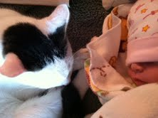 Evanny with Gustav, the Most Loving Cat in the World